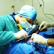 Хирургические операции ветеринарные фото