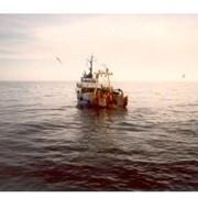 Экспорт рыбной продукции фото