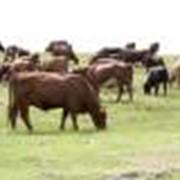 Премиксы для сельскохозяйственных животных, для птицы, куры, гуси, утки, индейка, перепелки, свиней, коров, рыб, разнообразные добавки фото