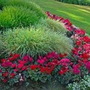 Устройство клумб и цветников фото