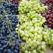 Все сорта винограда фото