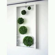 Мох Ягель Зеленый Коробка с окном 500 гр фото