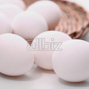 Яйца птицы фото