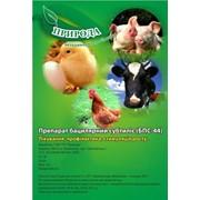 Ветеринарный пробиотик БПС-44 (на основе штамма Bacillus subtilis 44-p) фото