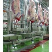 Убой сельскохозяйственных животных, оборудование для убоя КРС фото