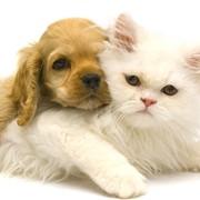 Анестезирующие средства для ветеринарии в Алматы фото