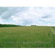 Земельный участок на ЗЖМ 21 сотка СНТ Красный садовод фото