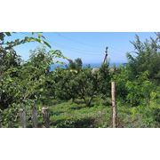 Земельный участок в Геленджике, Криница - 9 соток. фото