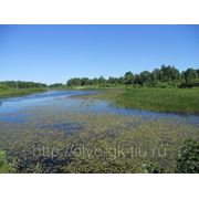 Предлагается участок земли в Латвии фото