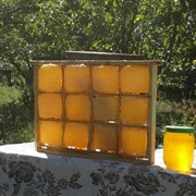 Мёд из лесного разнотравья, Мёд из лесного разнотравья оптом фото
