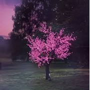 Светодиодное дерево «Сакура» фото