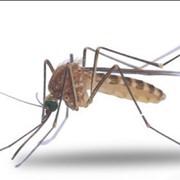 Борьба с осами, комарами, клещами и прочими уличными насекомыми. Дезинсекция фото