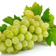 Минеральное удобрение для винограда Келкат В фото