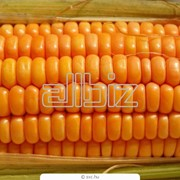 Кукуруза зерно Фуражная и Не фуражная фото