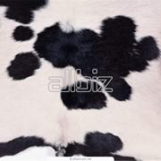 Шкура быка - бугай фото