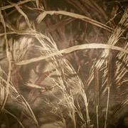 Зимняя кожаная обувь для девочек Ренбут 32110 фото