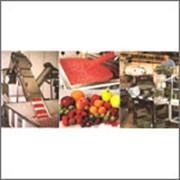 Линии по производству натуральных соков, нектаров, напитков как из свежих фруктов, так и из концентратов. фото