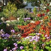 Устройство цветников и клумб №47 фото