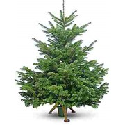 Новогодние елки фото