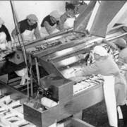 Машина сортировки сельди ТРАЙМАН JPLI2 фото