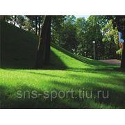 Рулонный газон - теневыносливый фото