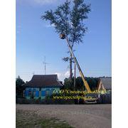 Профессиональная валка деревьев. Удаление пней. фото