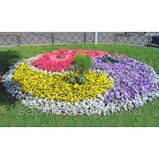 Оформление цветников и клумб фото