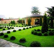 Укладка рулонного и сеяного газона, ландшафтный дизайн +7(777)-489-70-05 ozelenenie.tov.kz фото