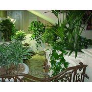 Оформление интерьера комнатными растениями фото