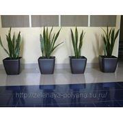 Растения в офис фото