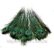Перья павлина фото