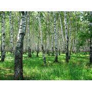 Лесотехническая экспертиза фото