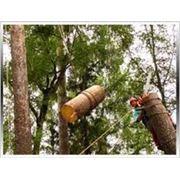 Кронирование деревьев от 5000 руб/объект фото