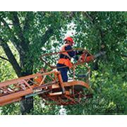 Спиливание и обрезка деревьев фото