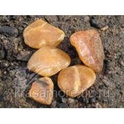 Ванночка «Симбирцитовое сияние»+подарок (камень Симбирцит) фото