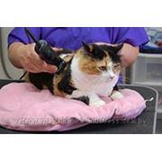 Гигиеническая стрижка котов и собак фото