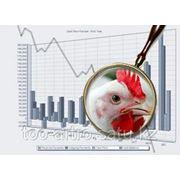 Бизнес-план птицефабрики фото