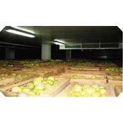 Бизнес-план овощехранилища фото