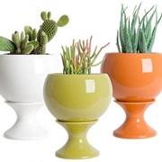 Горшки для цветов ( пластмассовые, керамические) фото