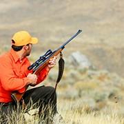 Организация охоты фото