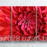 Модульна картина на полотні Червона жоржина код КМ100180-079 фото