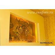 Фотообои на потолке с услугой монтажа фото