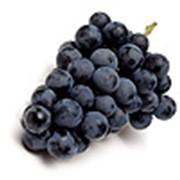 Виноград черный фото