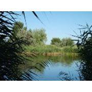 Земельные участки на берегу реки своя береговая линия фото