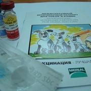 Ветеринарная вакцинация фото