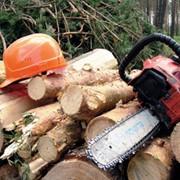 Рубка леса, заказать в Украине фото