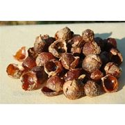 Мыльные орехи Мукоросси фото