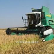Уборка зерновых услуга фото