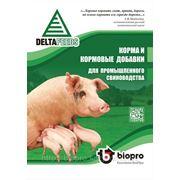 Премиксы для супоросных и лактирующих свиноматок фото