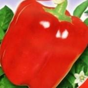 Семена перца сладкого Красный гигант (30 штук) фото